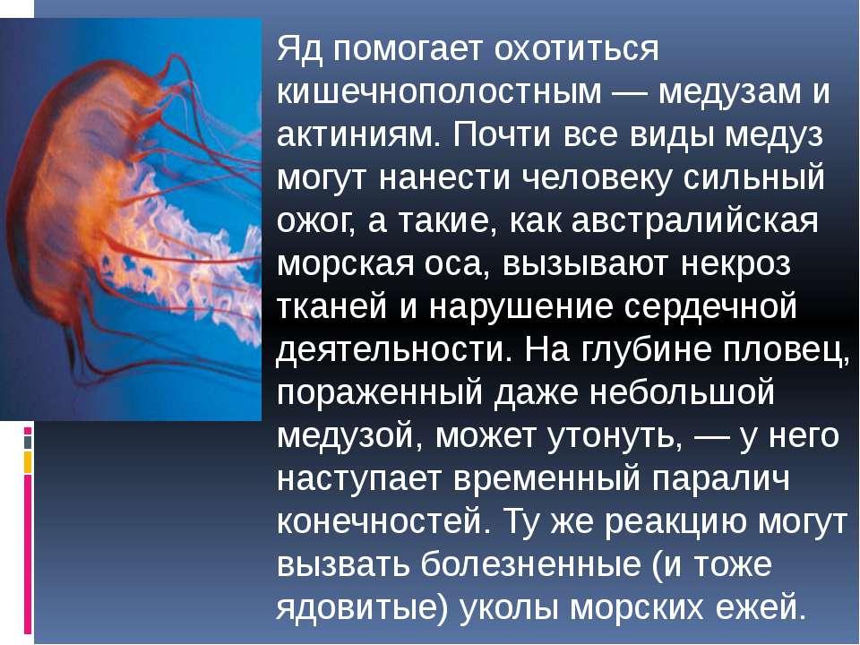 Яд помогает охотиться кишечнополостным — медузам и актиниям. Почти все виды м...
