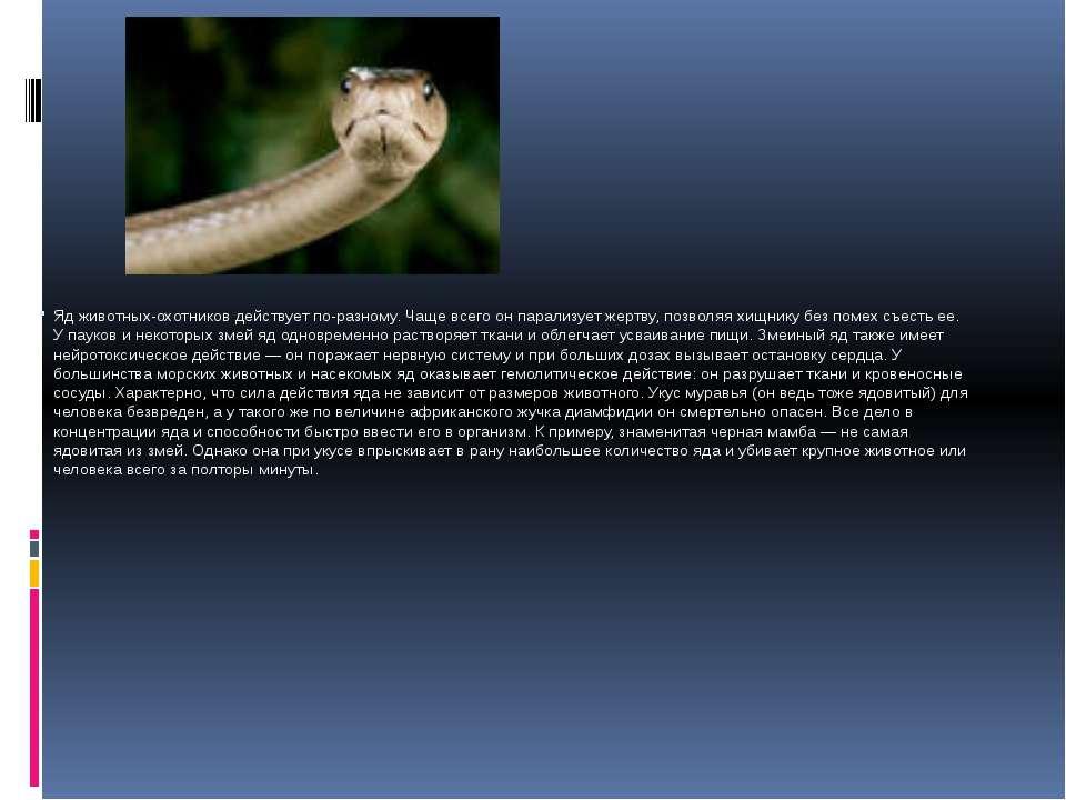 Яд животных-охотников действует по-разному. Чаще всего он парализует жертву, ...