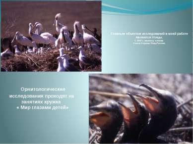 Главным объектом исследований в моей работе являются птицы. С 2007 г. являюсь...