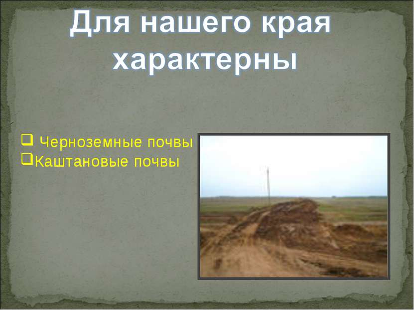 Черноземные почвы Каштановые почвы