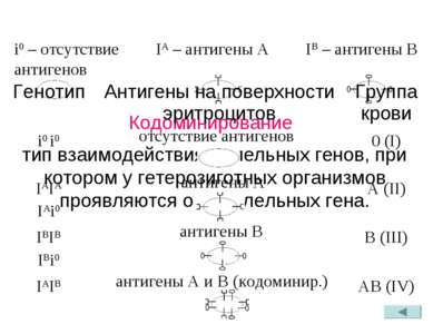Кодоминирование IA – антигены A IB – антигены B тип взаимодействия аллельных ...