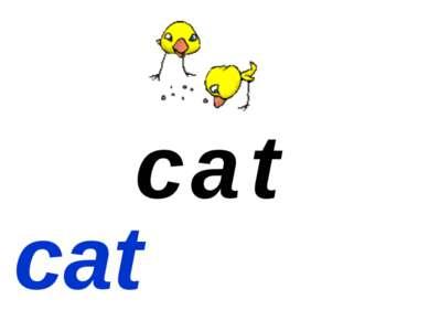 c t a cat