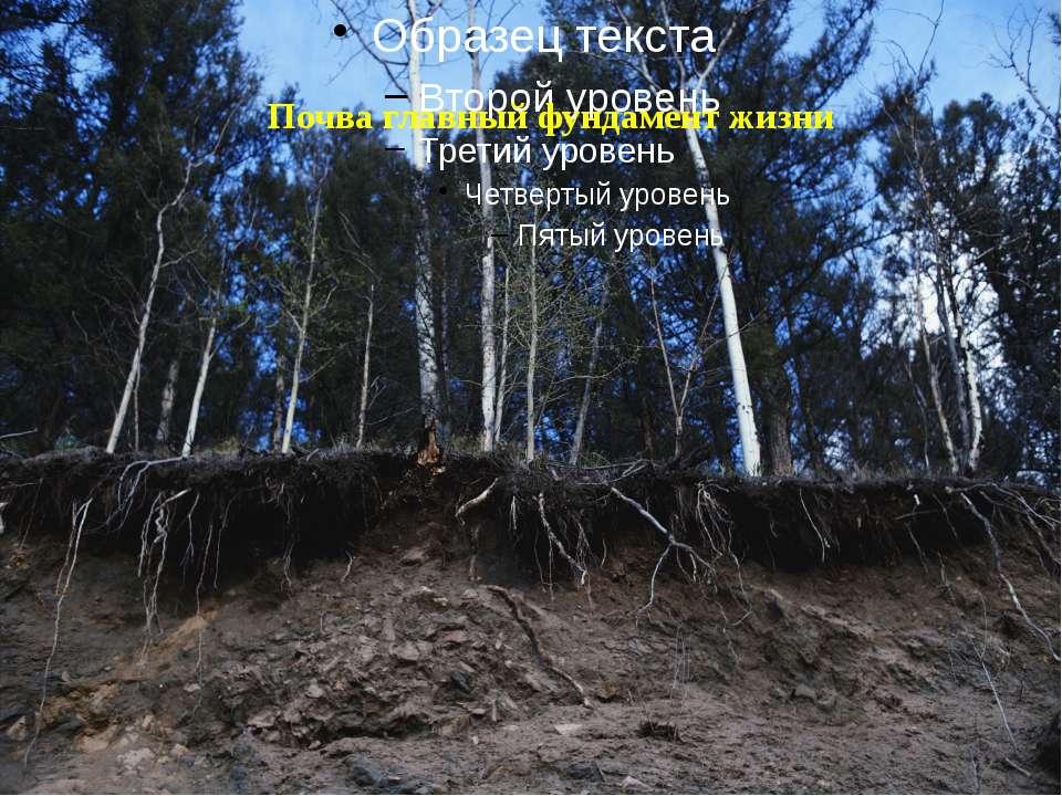 Почва главный фундамент жизни