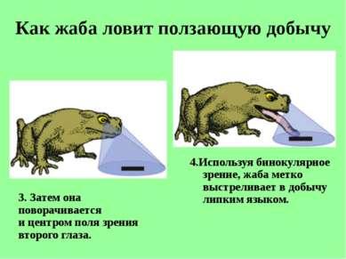Как жаба ловит ползающую добычу 3. Затем она поворачивается ицентром поля зр...