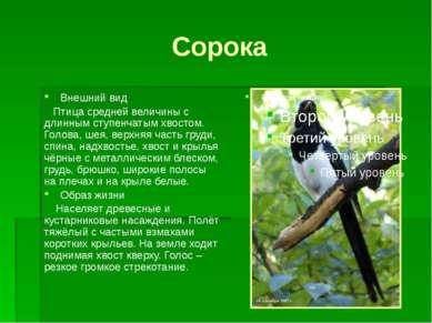 Сорока Внешний вид Птица средней величины с длинным ступенчатым хвостом. Голо...