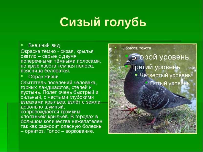 Сизый голубь Внешний вид Окраска тёмно - сизая, крылья светло – серые с двумя...