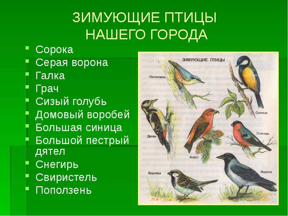 ЗИМУЮЩИЕ ПТИЦЫ НАШЕГО ГОРОДА Сорока Серая ворона Галка Грач Сизый голубь Домо...