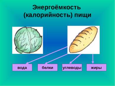 Энергоёмкость (калорийность) пищи вода жиры углеводы белки