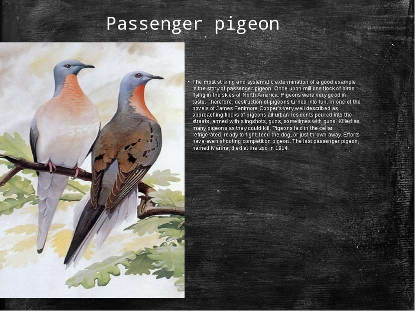 Passenger pigeon The most striking and systematic extermination of a good exa...