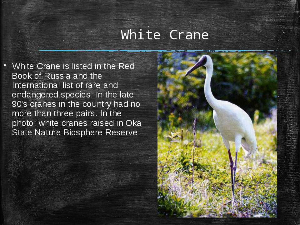 White Crane White Crane is listed in the Red Book of Russia and the Internati...