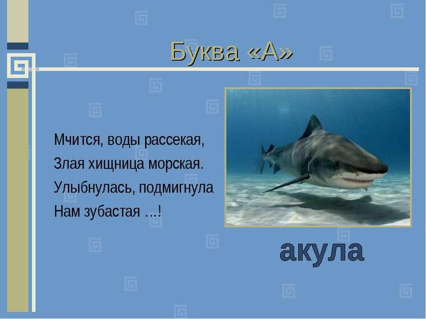 Буква «А» Мчится, воды рассекая, Злая хищница морская. Улыбнулась, подмигнула...