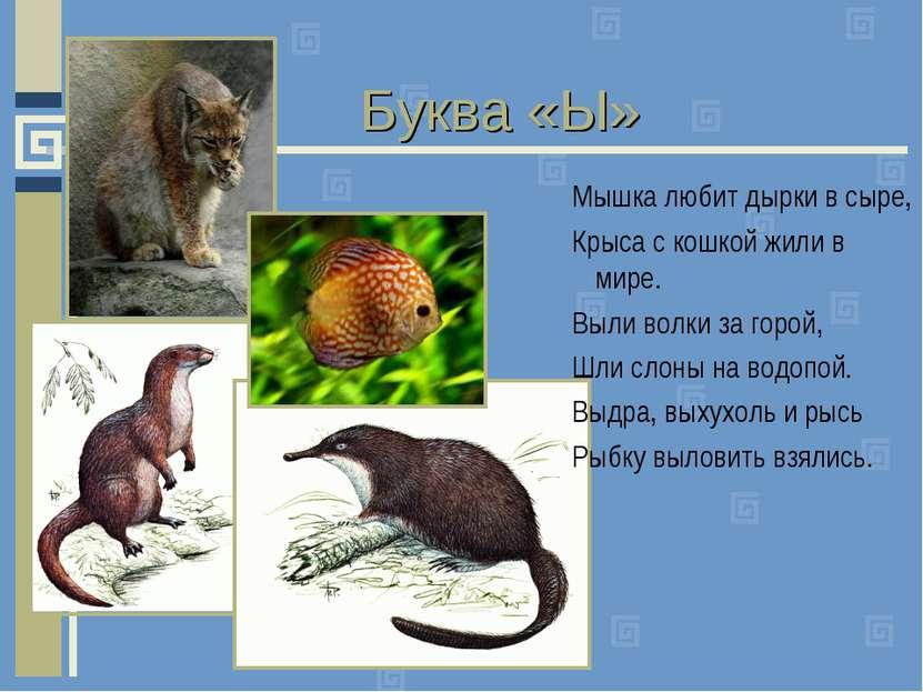 Буква «Ы» Мышка любит дырки в сыре, Крыса с кошкой жили в мире. Выли волки за...