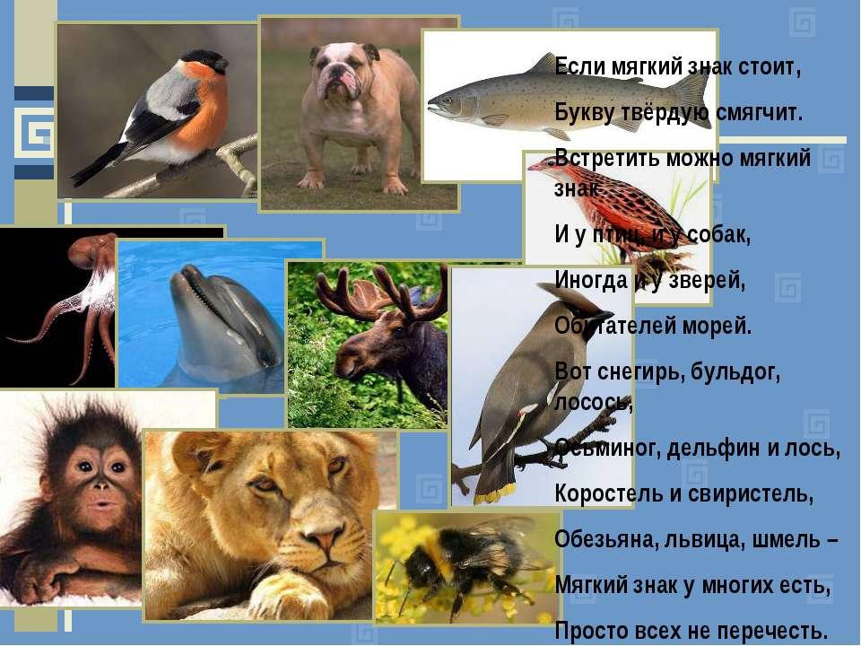 Птицы с мягким знаком