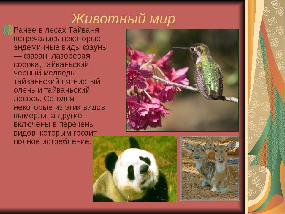Животный мир Ранее в лесах Тайваня встречались некоторые эндемичные виды фаун...