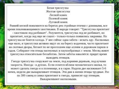 Белая трясогузка Желтая трясогузка Лесной конек Полевой конек Луговой конек Р...