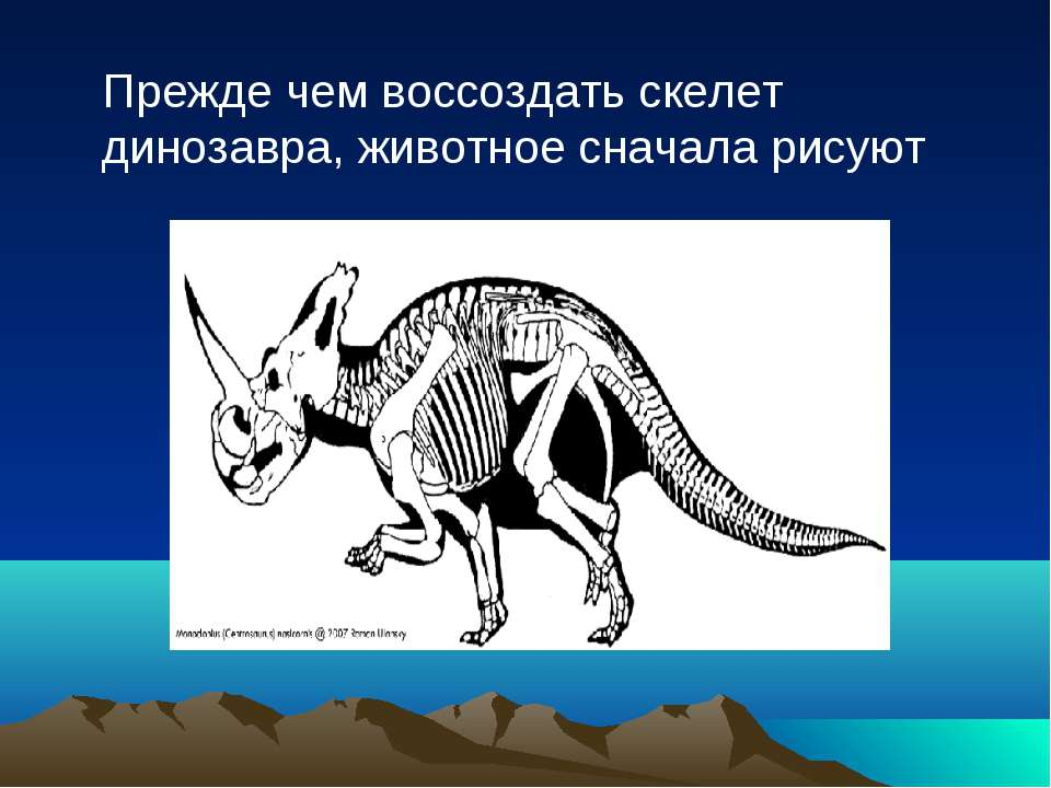 Прежде чем воссоздать скелет динозавра, животное сначала рисуют