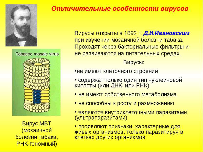 Отличительные особенности вирусов Вирусы открыты в 1892 г. Д.И.Ивановским при...