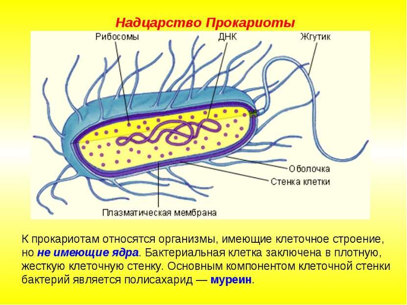 К прокариотам относятся организмы, имеющие клеточное строение, но не имеющие ...