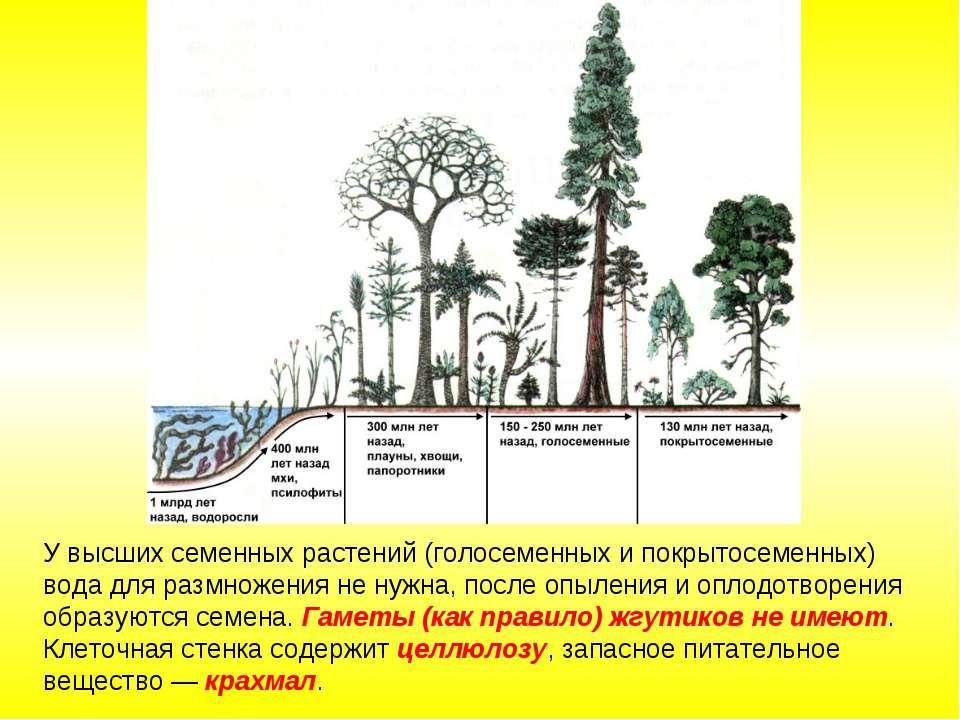 У высших семенных растений (голосеменных и покрытосеменных) вода для размноже...