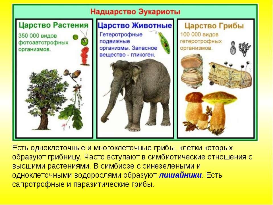 Есть одноклеточные и многоклеточные грибы, клетки которых образуют грибницу. ...