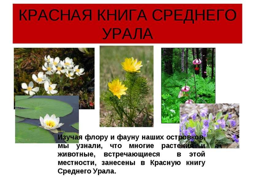 КРАСНАЯ КНИГА СРЕДНЕГО УРАЛА Изучая флору и фауну наших островков, мы узнали,...