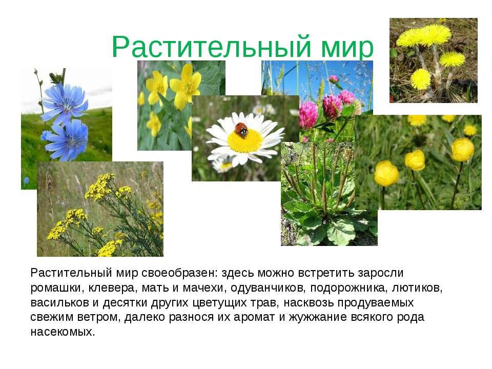 Растительный мир Растительный мир своеобразен: здесь можно встретить заросли ...