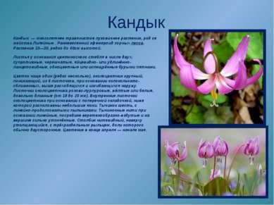 Кандык Кандык—многолетнеетравянистоелуковичноерастение,родсемействаЛ...