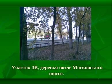 Участок 3В, деревья возле Московского шоссе.