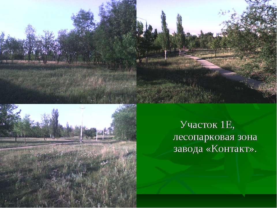 Участок 1Е, лесопарковая зона завода «Контакт».