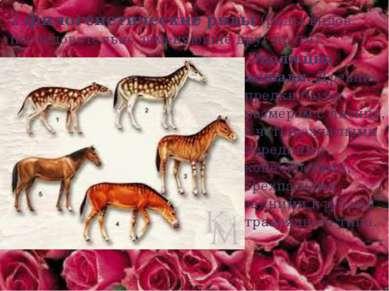 2.филогенетические ряды (ряды видов, последовательно заменяющие друг друга). ...