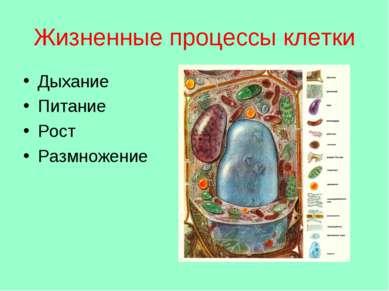 Жизненные процессы клетки Дыхание Питание Рост Размножение