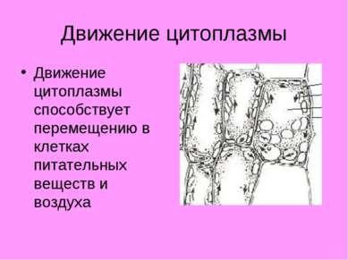 Движение цитоплазмы Движение цитоплазмы способствует перемещению в клетках пи...