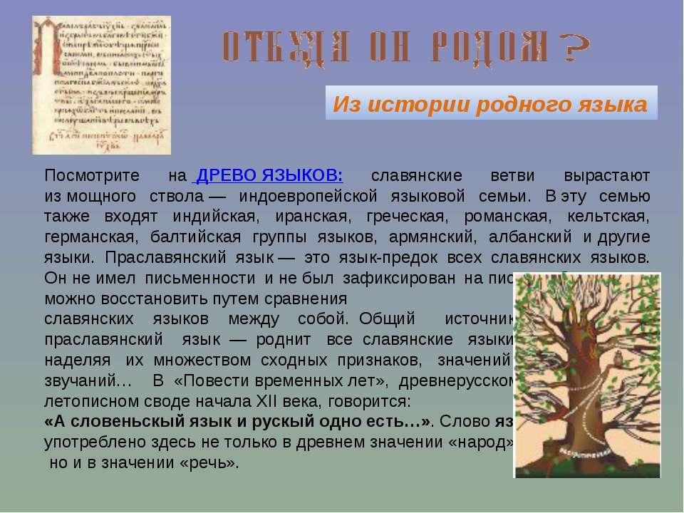 Из истории родного языка Посмотрите на ДРЕВО ЯЗЫКОВ: славянские ветви выраст...