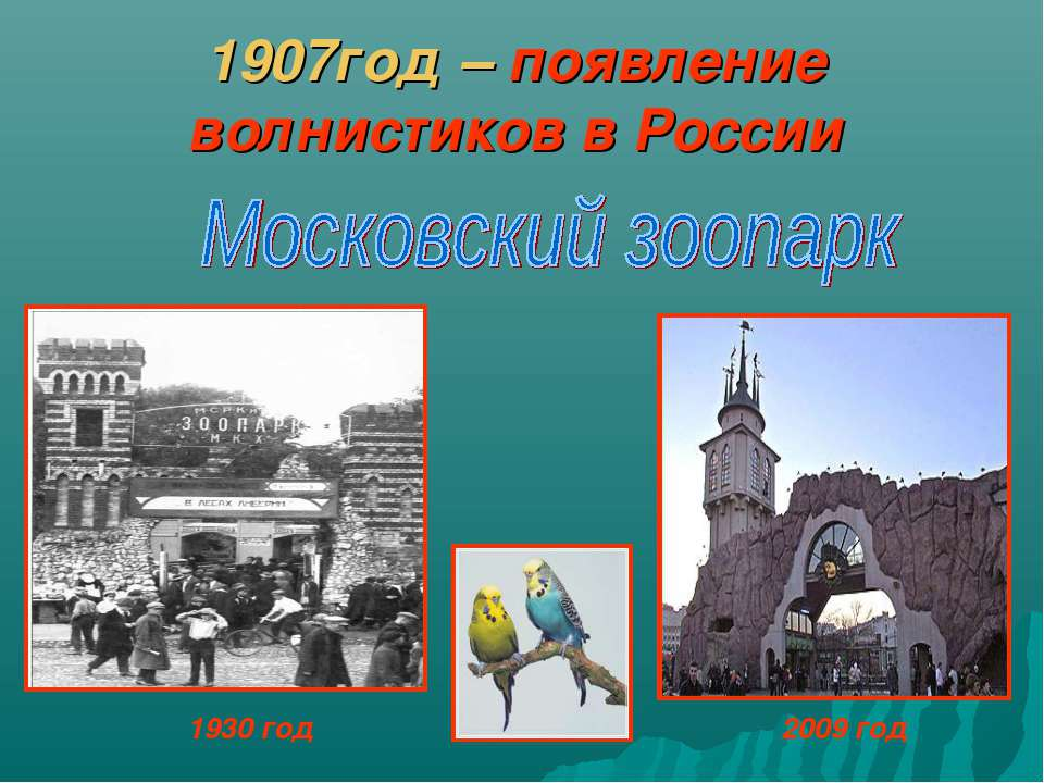 1907год – появление волнистиков в России 1930 год 2009 год