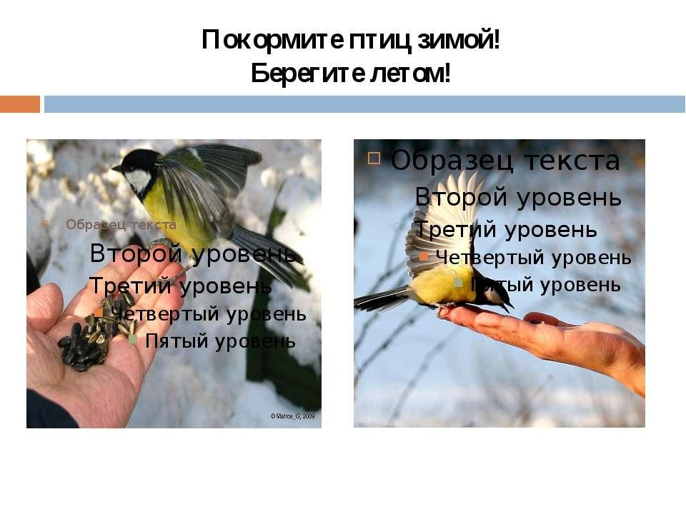 Покормите птиц зимой! Берегите летом!