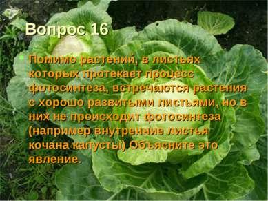 Вопрос 16 Помимо растений, в листьях которых протекает процесс фотосинтеза, в...