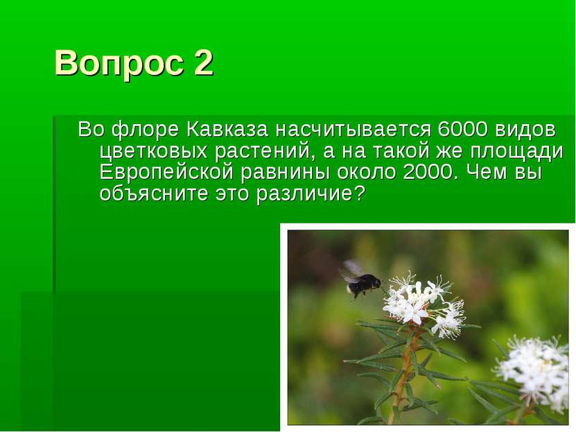 Вопрос 2 Во флоре Кавказа насчитывается 6000 видов цветковых растений, а на т...