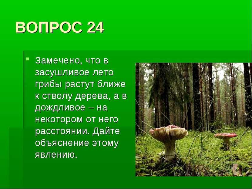ВОПРОС 24 Замечено, что в засушливое лето грибы растут ближе к стволу дерева,...