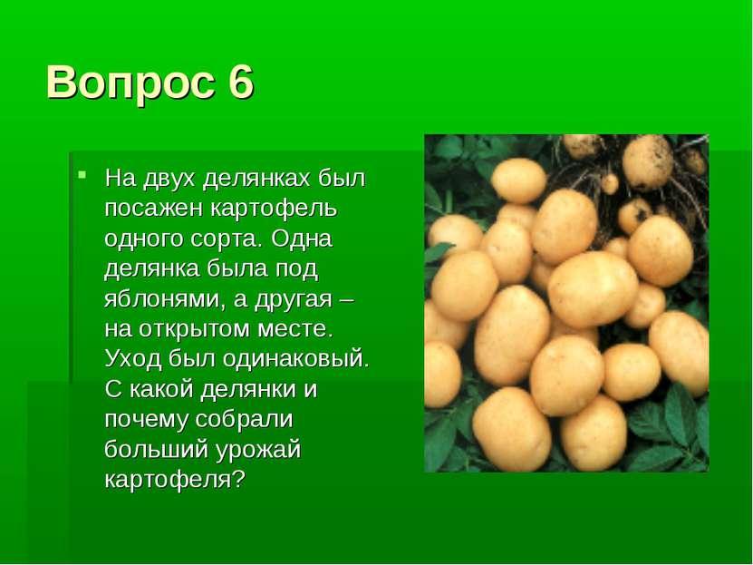 Вопрос 6 На двух делянках был посажен картофель одного сорта. Одна делянка бы...