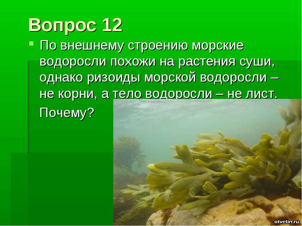 Вопрос 12 По внешнему строению морские водоросли похожи на растения суши, одн...