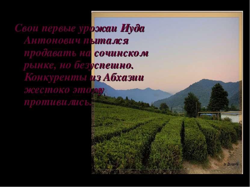 Свои первые урожаи Иуда Антонович пытался продавать на сочинском рынке, но бе...