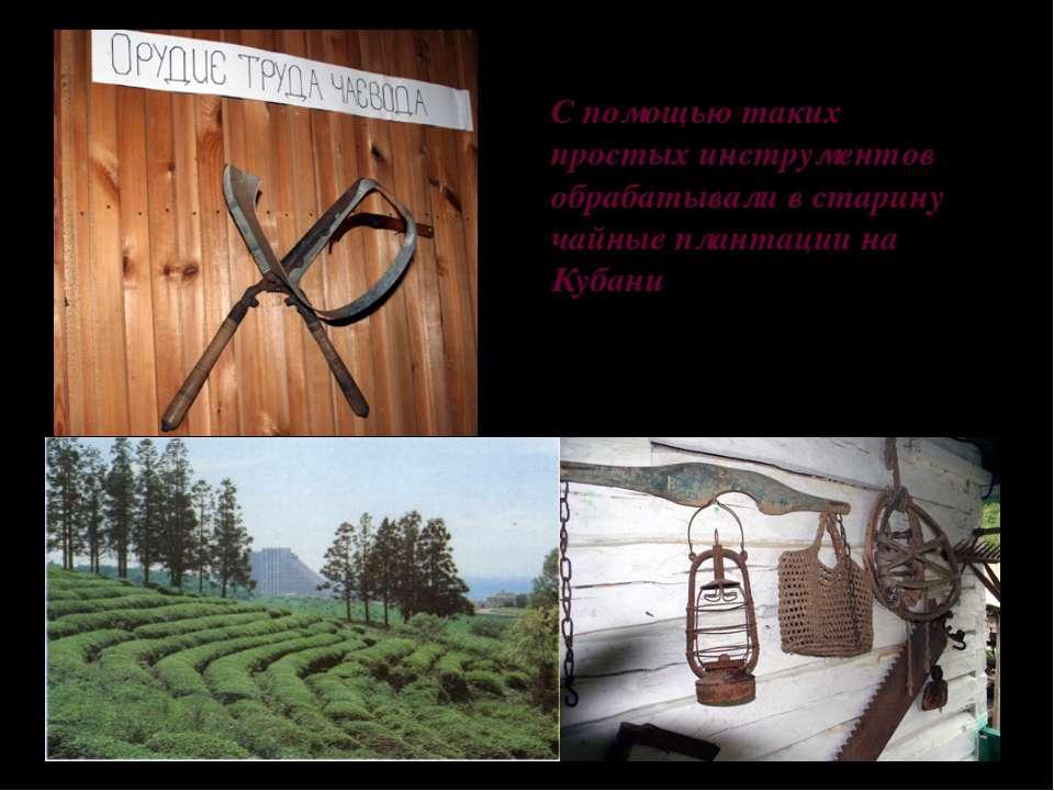 С помощью таких простых инструментов обрабатывали в старину чайные плантации ...