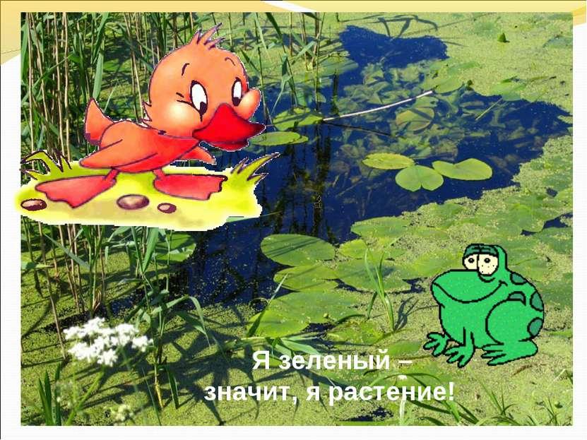 Я зеленый – значит, я растение!