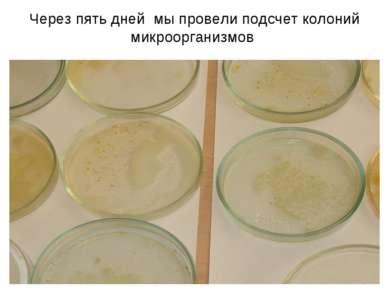 * Через пять дней мы провели подсчет колоний микроорганизмов