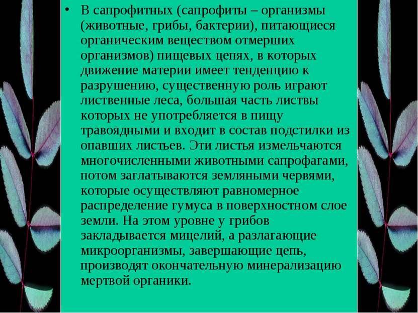 В сапрофитных (сапрофиты – организмы (животные, грибы, бактерии), питающиеся ...