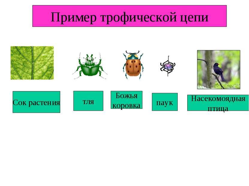 Сок растения тля Божья коровка паук Насекомоядная птица Пример трофической цепи