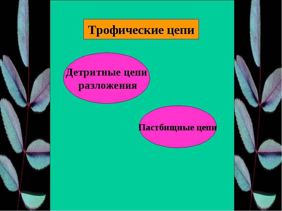 Трофические цепи Пастбищные цепи Детритные цепи разложения