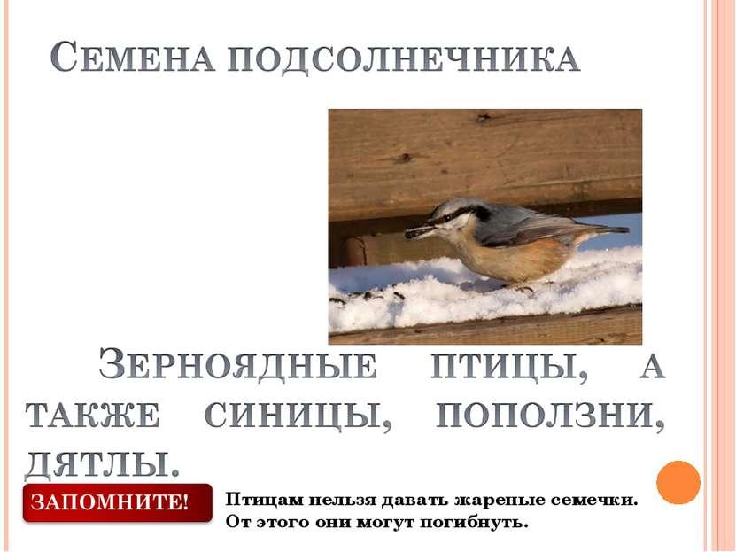 Птицам нельзя давать жареные семечки. От этого они могут погибнуть.