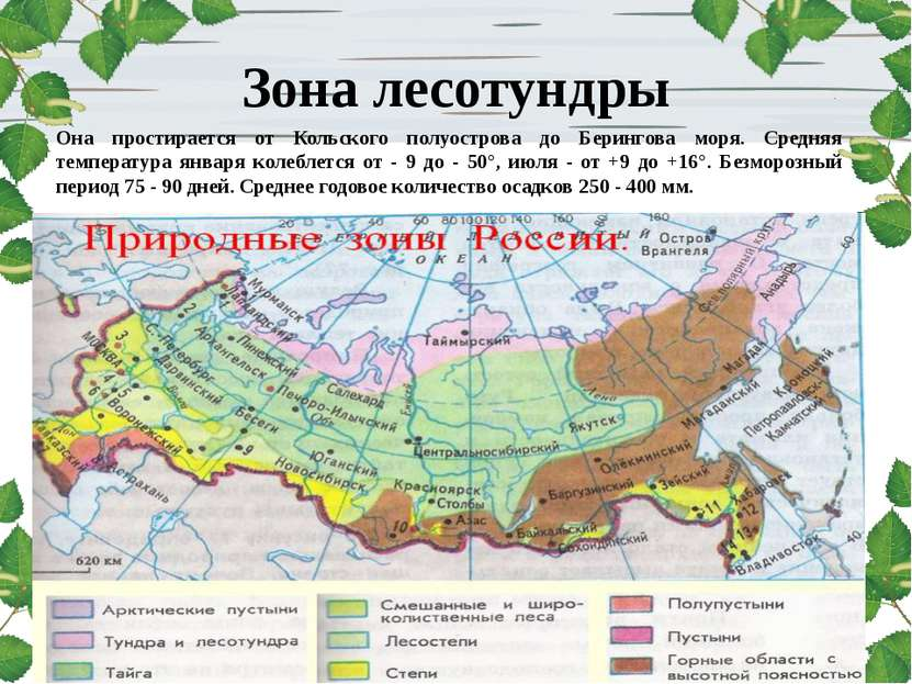 Зона лесотундры Она простирается от Кольского полуострова до Берингова моря. ...