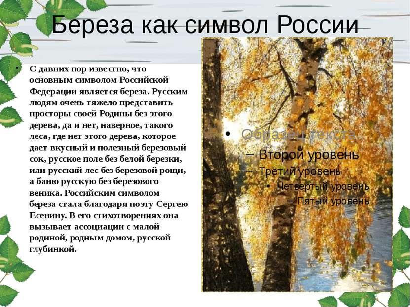 Береза как символ России С давних пор известно, что основным символом Российс...